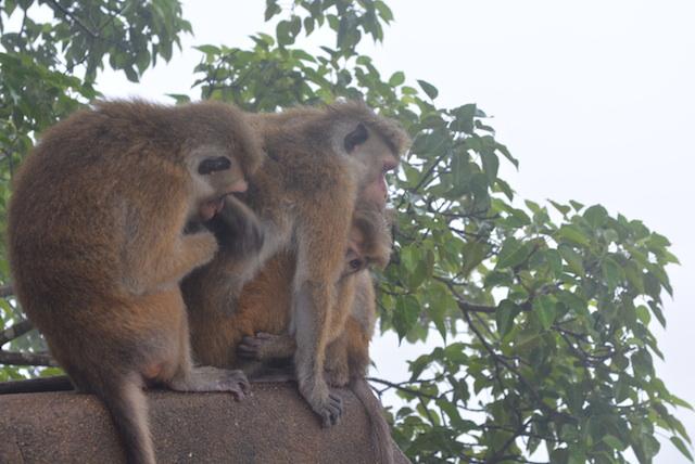 スリランカ、野生動物、まとめ