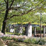 子供、楽しい、花のみどりのフェスティバル、2019、東品川海上公園