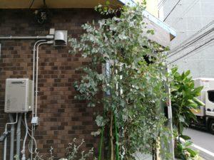 朝8時、行列、本場台湾、朝食、東京豆漿生活、五反田