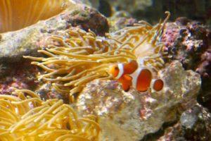 品川在住、ファミリー、大人気、しながわ水族館