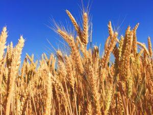 不自然な食べ物、遺伝子組み換え食品、発ガン性、アレルギーの原因