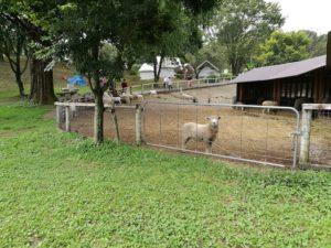 動物好き、癒し、もふもふ体験、伊香保グリーン牧場