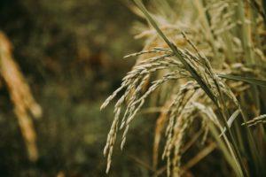 ダイエット、アレルギー、米粉ぱん、和良、自由が丘