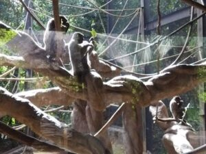 動物、アスレチック、渓流、子ども大満足、よこはま動物園ズーラシア
