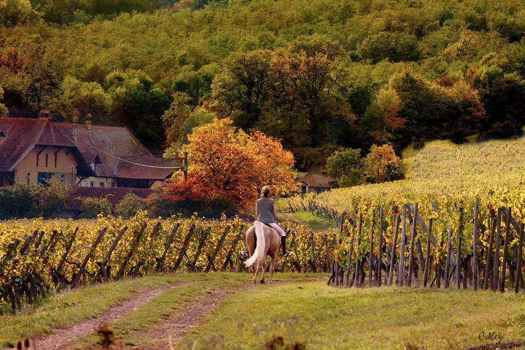 フランス、スローフード、スローライフ、オーガニック、農業、マーケット