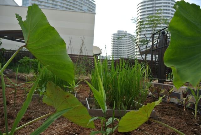 横浜、マークイズ、みなとみらい、屋上菜園、マルシェ
