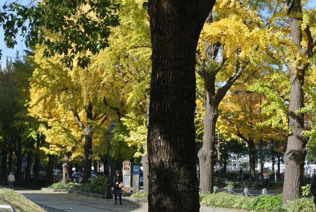 秋の紅葉、散策、みなとみらい