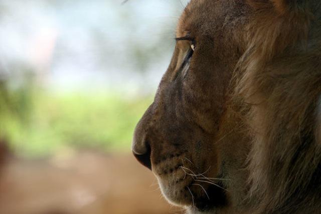 ナミビア戦争、密猟、身勝手な人間