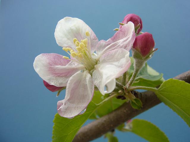 涙が止まらない、青森のりんご農家の実話、奇跡のリンゴ、家族愛、情熱、感動の映画