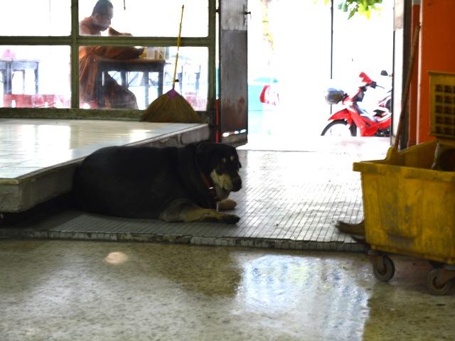 バンコク、ペットブーム、コンビニ、野良犬問題