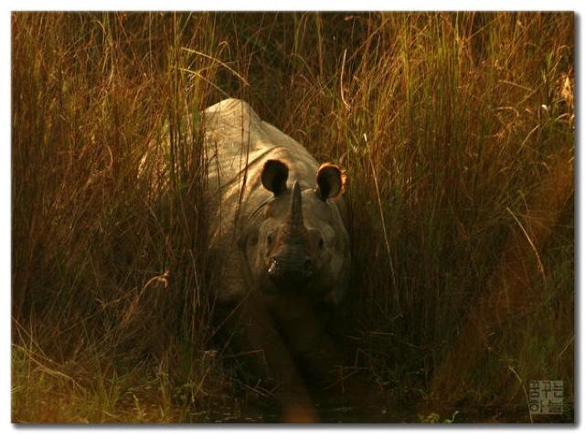 人類の野生動物減少、貧困、内戦、人口増加