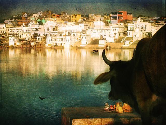 時代の流れに逆らう、インド、肉食ブーム