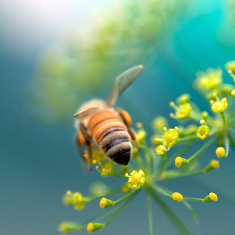 世界で農薬禁止、ミツバチを守る、人間にも害