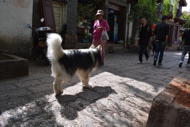 雲南省、世界遺産の街、マッチする、癒しの動物、まとめ