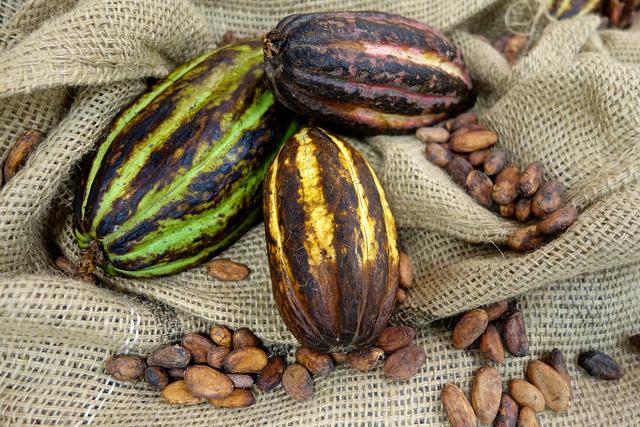 世界、ウェルネス傾向、インド、チョコレートブーム