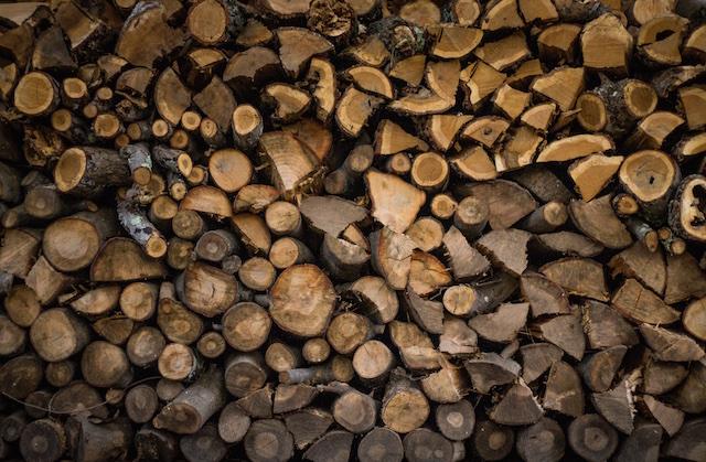 食品廃棄問題、着る野菜、森を守る、遊ぶ木、提案
