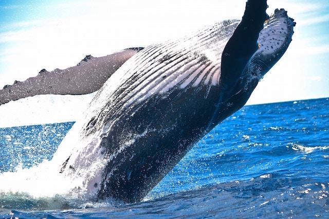 胃から出てきた、全世界、衝撃、クジラ、悲痛な訴え
