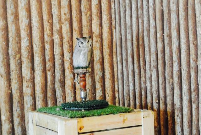 動物カフェ、第三弾、サーバルキャット、フクロウ、会える、ザ・アニマルカフェ