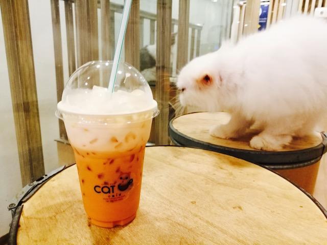 動物カフェ、第二弾、シーロム、もふもふ、キャットアップ