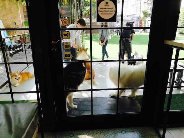 動物カフェ第五弾、ドックインタウン、若いバンコクの子、ブーム
