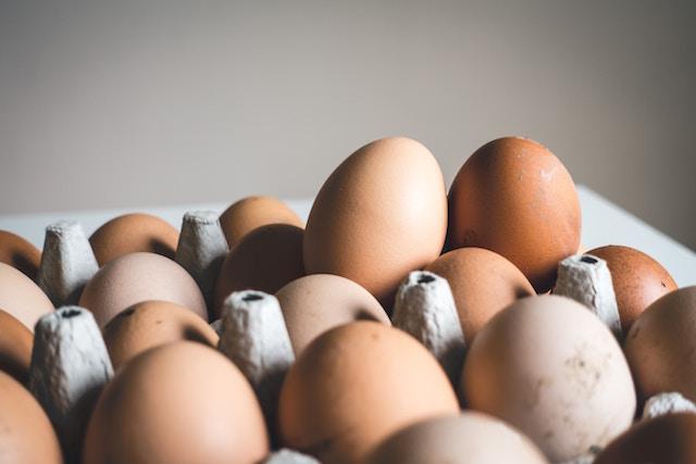 システマティック、鶏の一生、私たち、今何を食べているのか