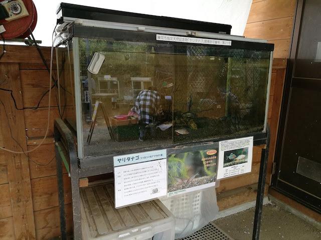 子供とお出かけ、遊具、ミニ遊園地、無料動物園、庚申山総合公園