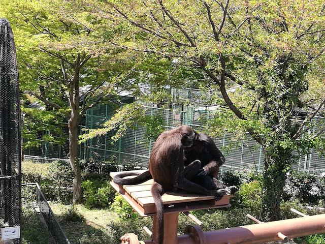 無料、充実、内容、桐生ケ丘動物園、群馬