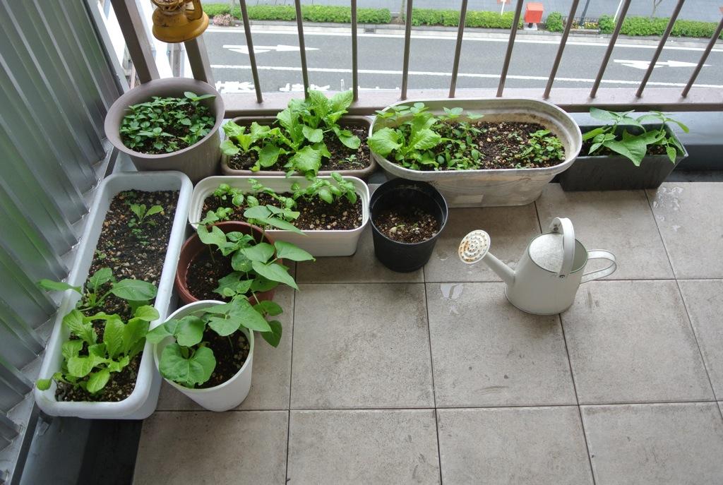 野菜、家庭菜園、環境問題、プロセス、100円
