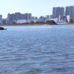 お台場湾岸、散策コース、ファミリー、お出かけスポット